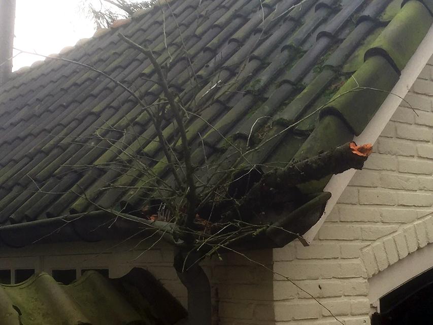 Schade door omgewaaide boom